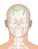 Tirando com esqueleto, ponto GB15 Toulinqi da acupuntura, 3D Illus Imagens de Stock Royalty Free