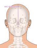 Tirando com esqueleto, ponto GV23 Shangxing da acupuntura, 3D Illu Foto de Stock