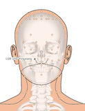 Tirando com esqueleto, ponto LI20 Yingxiang da acupuntura, 3D Illu Imagens de Stock