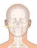 Tirando com esqueleto, ponto ST3 Juliao da acupuntura, 3D Illustra Fotografia de Stock