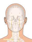 Tirando com esqueleto, ponto ST10 Shuitu da acupuntura, 3D Illustr Fotografia de Stock