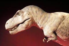 Tiranosaurio Fotografía de archivo