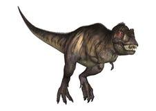 tiranosaurio del ejemplo 3D en blanco Fotos de archivo libres de regalías