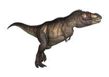 tiranosaurio del ejemplo 3D en blanco Foto de archivo