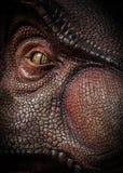 Tiranosaurio Rex Imagenes de archivo