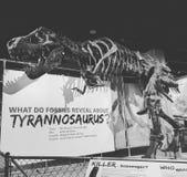 Tiranosaurio Rex Imágenes de archivo libres de regalías