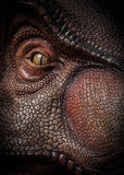Tiranossauro Rex Imagens de Stock