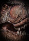 Tiranossauro Rex Fotografia de Stock Royalty Free