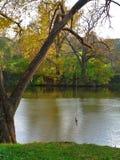 Tirante com mola que salta sobre a lagoa Fotografia de Stock