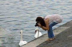 Tirar los cisnes Imagenes de archivo