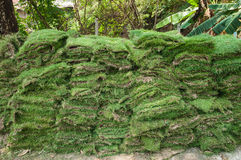 Tiras da grama, pilha fotografia de stock royalty free