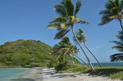 Tiras de la arena con las palmeras y agua en la playa del Caribe de los lados paganos fotografía de archivo