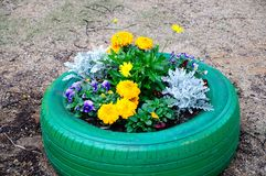 Tire of the flower bed Royalty Free Stock Images