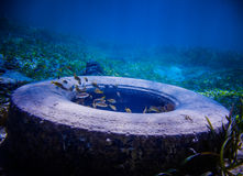 Tire Found Underwater Royalty Free Stock Images