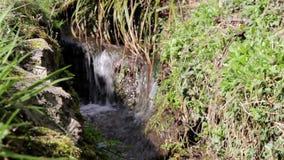 Tire hacia abajo el banco ascendente cercano de Mini Water Falls Past Grass de los flujos de corriente del foco metrajes