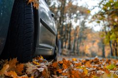 Tire in leaves Royalty Free Stock Images