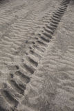Tire Marks in the Sand on Wasaga Beach, Ontario. Tire marks from a tractor on a beach with characteristic waves in the sand on either side.  The location is Royalty Free Stock Image