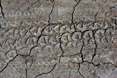Tire marks on ground, horizontal background texture royalty free stock photo
