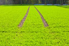 Tire Path In Field Royalty Free Stock Images