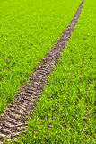 Tire Path In Field Stock Photo
