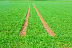Tire Path In Field Royalty Free Stock Photography