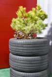 Tire Plant Container Royalty Free Stock Photography