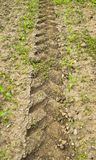 Tire print of tractor in field Stock Image