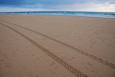 Tire prints on the beach Royalty Free Stock Image