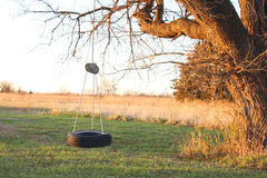 Tire swing. Hanged on a big tree Royalty Free Stock Photo