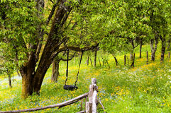 Tire swing hanging in a tranquil forest glade Royalty Free Stock Photos
