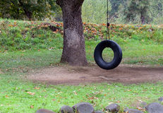 Tire swing in a tree. Tire swing hangs from a tree royalty free stock photography