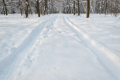 Tire trace on snow in park Royalty Free Stock Images