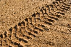 Tire track Stock Photography
