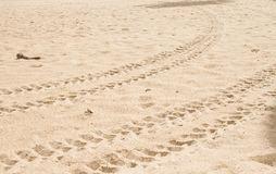 Tire track on the sand Royalty Free Stock Images