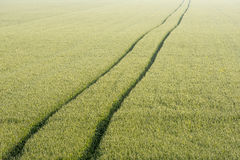Tire tracks through the cornfield Royalty Free Stock Photography