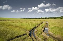 Tire Tracks in field. A wrong turn leaves muddy tire tracks in an open field Royalty Free Stock Image