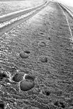 Tire Tracks and Footpirnts in Sand Royalty Free Stock Images