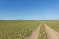 Tire tracks in green field with clear blue sky background Stock Image