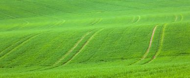 Tire tracks on the green field Stock Image