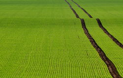 Tire tracks on the green field Royalty Free Stock Image