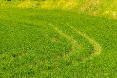 Tire tracks on the green grass Royalty Free Stock Photo