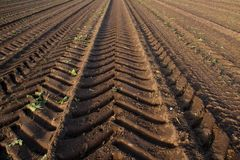 Tire tracks of a heavy harvester in brown earth stock photography