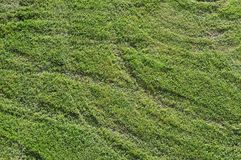 Tire tracks in meadow. Crossing tire tracks of a turf tractor in green grass Royalty Free Stock Photo