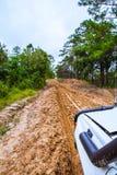 Tire tracks. Royalty Free Stock Photo