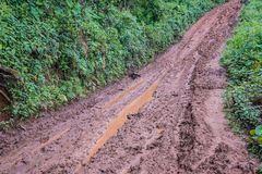 Tire tracks on a muddy road. Stock Photography