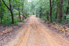 Tire tracks on a muddy road in the countryside. Royalty Free Stock Photo