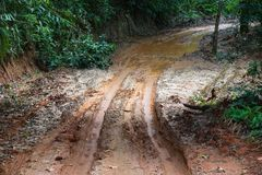 Tire tracks on a muddy road. Stock Images