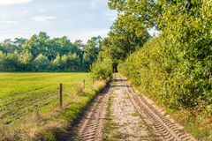Tire tracks printed in the sand of a sandy path next to a meadow. And a long hedge. It is a sunny day with a blue sky in the Dutch summer season royalty free stock photography