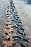Tire tracks on the sand Stock Image