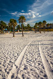Tire tracks in the sand and palm trees on the beach in Clearwate Royalty Free Stock Photo
